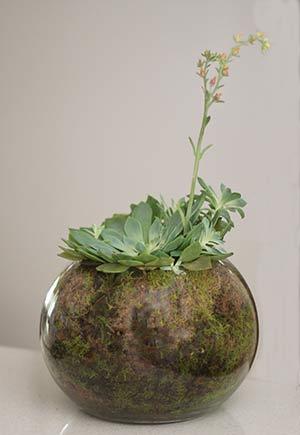 Sphagnum Moss in Terrarium