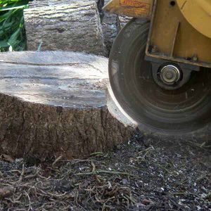 Tree Stump Removal Using Stump Grinder