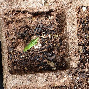 Biodegradable Seedling Pot
