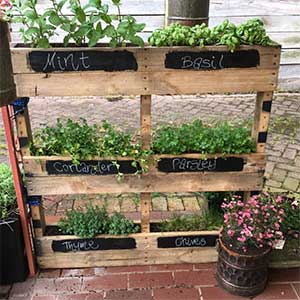 Herb Growing Stand