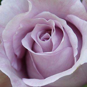 Rose Charle de Gaulle