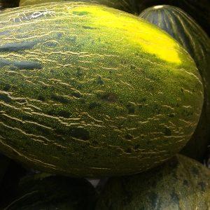 Piel de-Sapo Melon